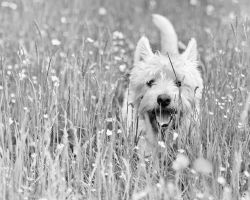 Happy in the long grass by AdrianSadlier