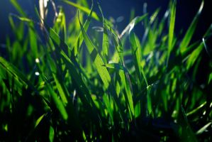 FRESH GRASS by passionNdesire