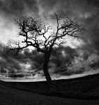 Enchanted Rock Tree by badchess