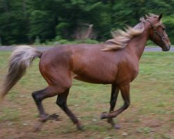Spirited Horse by JenniferSpriggs