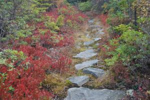 Boar's Nest Trail into the Dolly Sods by Forest-Imp