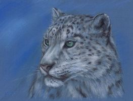 Snow Leopard by nudge1