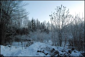 December Afternoon II by Eirian-stock