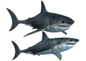 Sharks-2 PNG Stock by Roys-Art