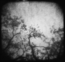 Uppermost by JillAuville