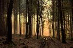 What you see in the woods IV by tomsumartin