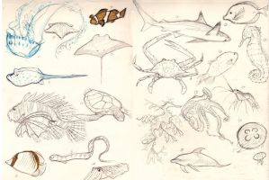 Draw 20.. Sea Creatures by skybrush