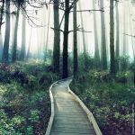 Deep Forest by ForestGirl