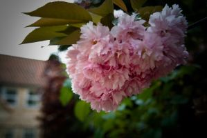 Blossom by SuiteDesign