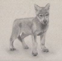Wolf pup by Slow-Bullet