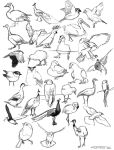 Bird practice sketches by namu-the-orca