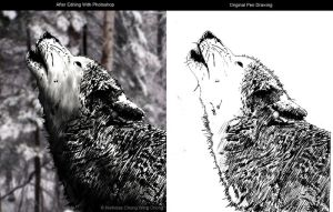 Grey wolf comparision by Nicshooter