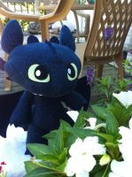 Toothless Loves Flowers by BeautifulHusky