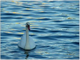 Water, Swan and the Sun by ziperka