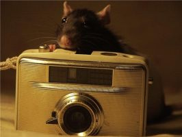 Furry photographer by Sally-Rat