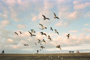 Flock of seagulls by TLO-Photography