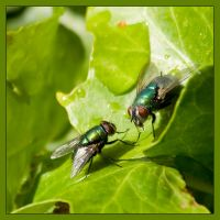 Two lovers on a leaf by mahgnitton