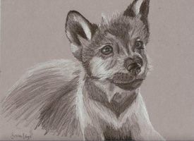 The Mexican Grey Wolf Pup by ekvogl