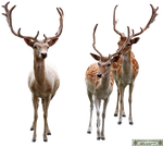 KymsCave-Stock Animals 11 by KymsCave-Stock