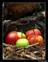 Apples 03 by dugonline