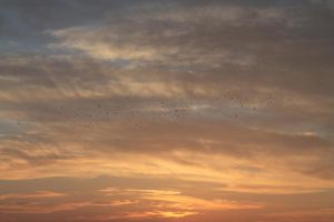 The Birds and the sky by bluster358