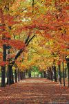 autumn scenery by Iulian-dA-gallery