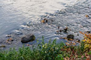 Stones on river by AndreaMetallurgico