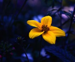 yellow flower 2 by Miiimzz
