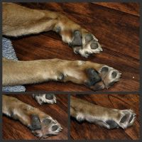 FREE Content - Dog Paw Refs by EvlonArts