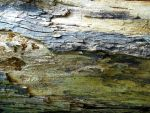 Stock Texture - decayed wood III by rockgem