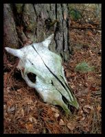 animal skull by Nedeila