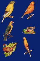 Vict pack 22-birds_quaddles by quaddles