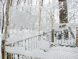 Snow and chicken wire by darchiel