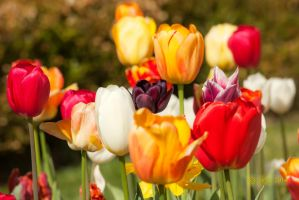 Spring Flowers 2014 by caillteone
