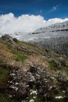 May 12, 2014 Bighorn Mountains by Corvidae65