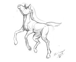 Foal sketch by zilvart