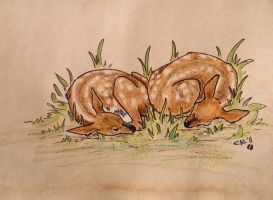 Fawns by IckyDog