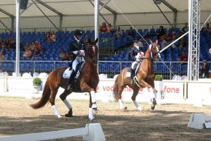 Dressage Passage Victory Ceremony Stock by LuDa-Stock