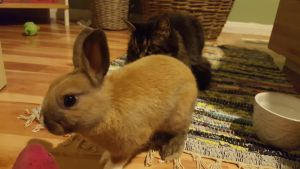 Cat/Rabbit Stock~ Koggy and Sorsha 3 by ChellytheBean