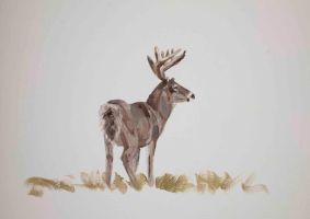 White tail deer study by Lara-Shychoski