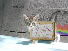 NYAN CAT by ScreamEmotion