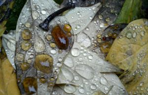 fall's raindrops II. by togdurien