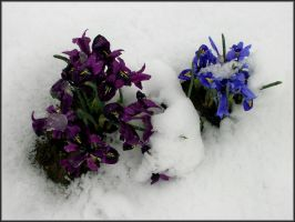Flowers In The Snow 1 by samurai23