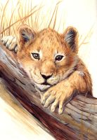 Lion Cub by asemo