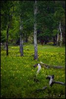 Wildflower Forests by kkart by Scapes-club