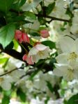 HAPPY WHITE TREE VERY HEARTY WITH PINK THINGS by AudraMBlackburnsArt