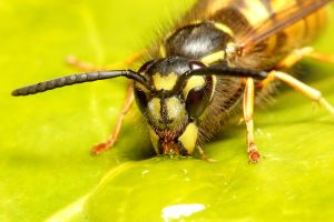 Wasp 02 by s-kmp