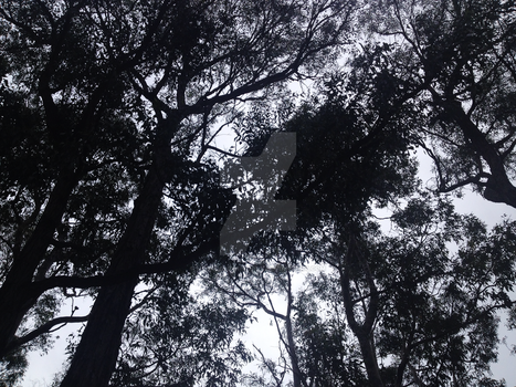 Haunted Trees by Megalomaniacaly