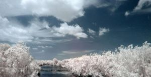 infrared 4 by Rihonus