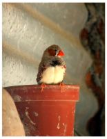Flowerpot Bird by crystalfalls